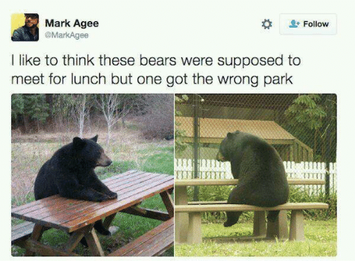 Bears, Got, and One: Mark Agee  @MarkAgee  Follow  I like to think these bears were supposed to  meet for lunch but one got the wrong park  TIT