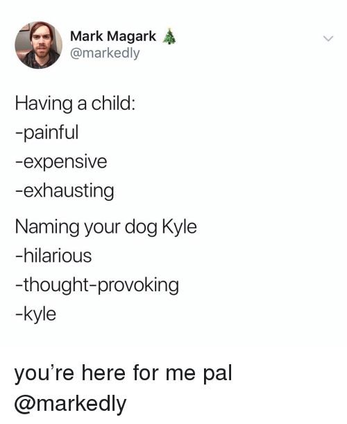 Memes, Hilarious, and Thought: Mark Magark  @markedly  Having a child  -painful  expensiVe  -exhausting  Naming your dog Kyle  -hilarious  -thought-provoking  kyle you're here for me pal @markedly