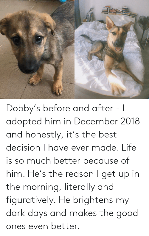 figuratively: MARM Dobby's before and after - I adopted him in December 2018 and honestly, it's the best decision I have ever made. Life is so much better because of him. He's the reason I get up in the morning, literally and figuratively. He brightens my dark days and makes the good ones even better.