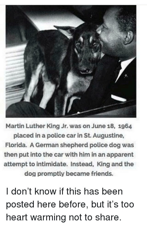 Martin Luther King: Martin Luther King Jr. was on June 18, 1964  placed in a police car in St. Augustine,  Florida. A German shepherd police dog was  then put into the car with him in an apparent  attempt to intimidate. Instead, King and the  dog promptly became friends. I don't know if this has been posted here before, but it's too heart warming not to share.