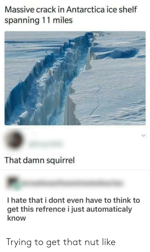 Antarctica: Massive crack in Antarctica ice shelf  spanning 11 miles  That damn squirrel  I hate that i dont even have to think to  get this refrence i just automaticaly  know Trying to get that nut like
