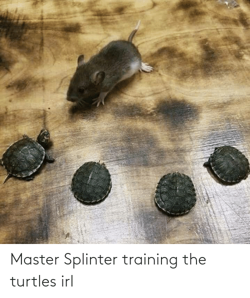 training: Master Splinter training the turtles irl