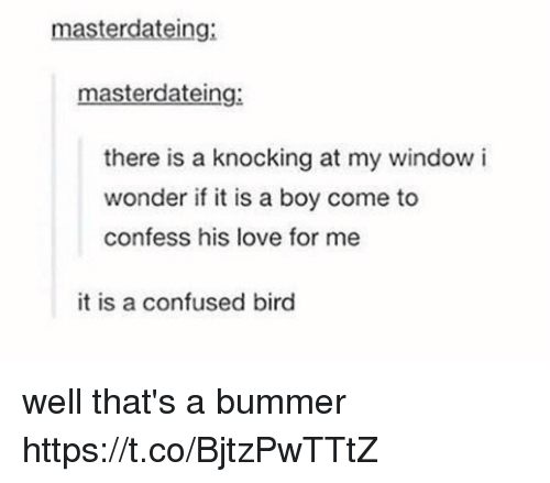 bummer: masterdateing:  masterdateing:  there is a knocking at my window i  wonder if it is a boy come to  confess his love for me  it is a confused bird well that's a bummer https://t.co/BjtzPwTTtZ