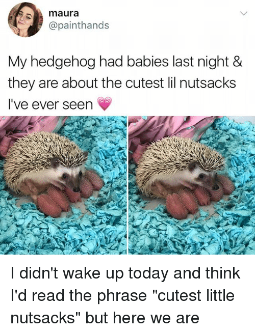 "Seens: maura  @painthands  My hedgehog had babies last night &  they are about the cutest lil nutsacks  I've ever seen I didn't wake up today and think I'd read the phrase ""cutest little nutsacks"" but here we are"