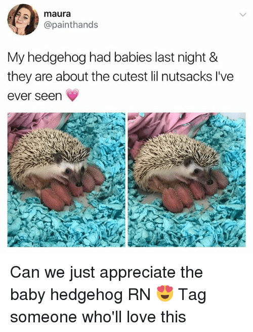 Seens: maura  @painthands  My hedgehog had babies last night &  they are about the cutest lil nutsacks l've  ever seen Can we just appreciate the baby hedgehog RN 😍 Tag someone who'll love this