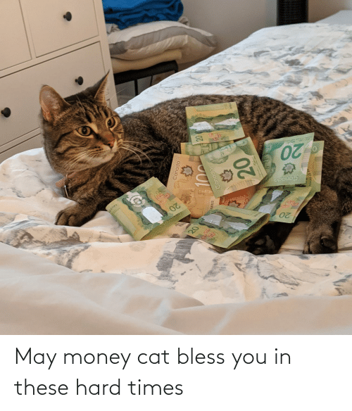 Money: May money cat bless you in these hard times
