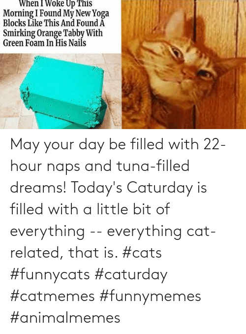 may: May your day be filled with 22-hour naps and tuna-filled dreams! Today's Caturday is filled with a little bit of everything -- everything cat-related, that is. #cats #funnycats #caturday #catmemes #funnymemes #animalmemes