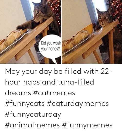funnymemes: May your day be filled with 22-hour naps and tuna-filled dreams!#catmemes #funnycats #caturdaymemes #funnycaturday #animalmemes #funnymemes