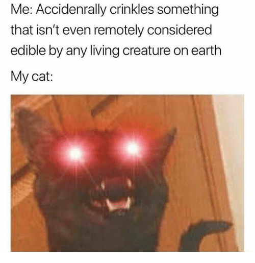 Earth, Humans of Tumblr, and Living: Me: Accidenrally crinkles something  that isn't even remotely considered  edible by any living creature on earth  My cat: