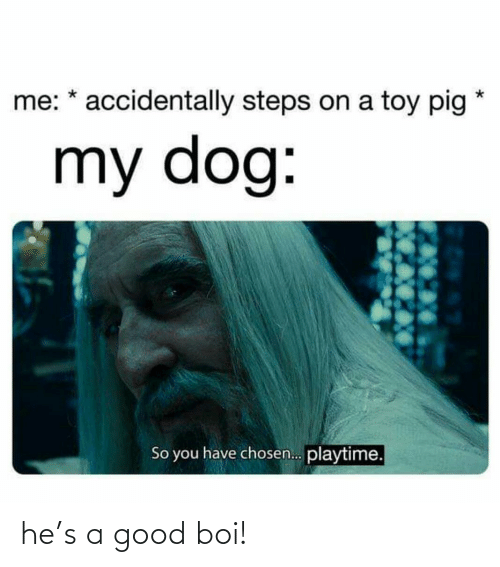 chosen: me: * accidentally steps on a toy pig  my dog:  So you have chosen. playtime. he's a good boi!