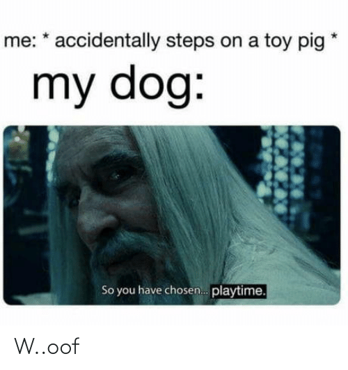 My Dog: me: * accidentally steps on a toy pig  my dog:  So you have chosen. playtime. W..oof