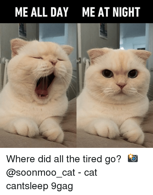 Allely: ME ALL DAY  ME AT NIGHT Where did all the tired go?⠀ 📸 @soonmoo_cat⠀ -⠀ cat cantsleep 9gag