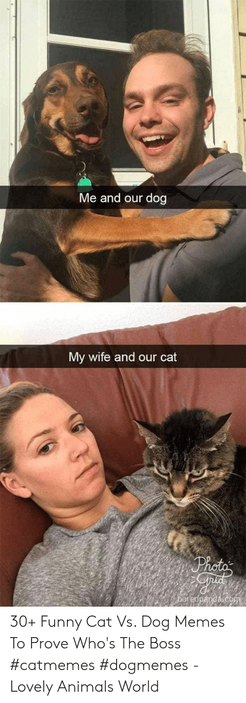 funny cat: Me and our dog  My wife and our cat 30+ Funny Cat Vs. Dog Memes To Prove Who's The Boss #catmemes #dogmemes - Lovely Animals World