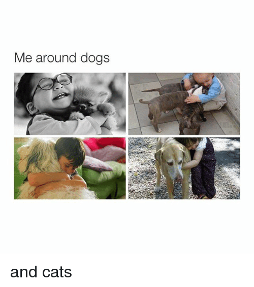 dog-and-cats: Me around dogs and cats