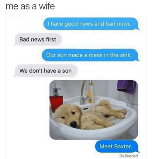 Bad, News, and Good: me as a wife  I have good news and bad news.  Bad news first  Our son made a mess in the sink  We don't have a son  Meet Baxter  Delivered