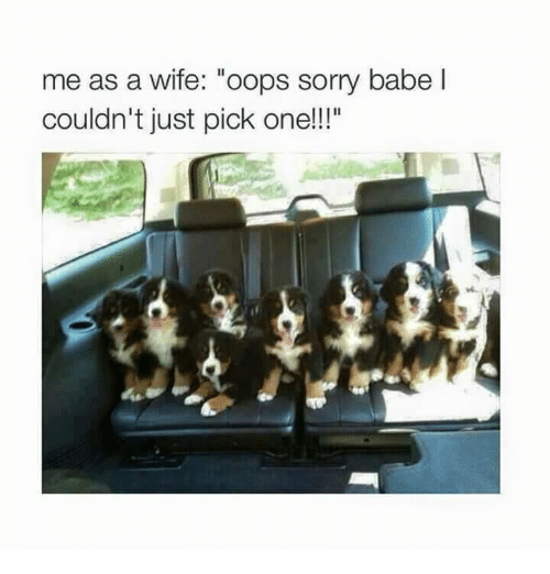 """Memes, Sorry, and Wife: me as a wife: """"oops sorry babel  couldn't just pick one!!""""  uldn't just pick one!!!"""""""