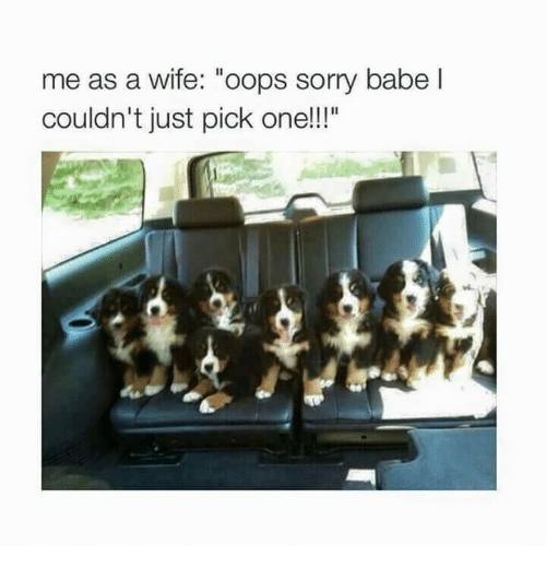 "Memes, Sorry, and Wife: me as a wife: ""oops sorry babel  couldn't just pick one!!"""