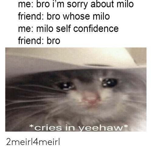 Confidence, Sorry, and Friend: me: bro i'm sorry about milo  friend: bro whose milo  me: milo self confidence  friend: bro  *cries in yeehaw* 2meirl4meirl