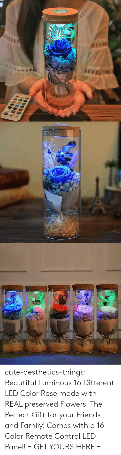 remote: me cute-aesthetics-things:  Beautiful Luminous 16 Different LED Color Rose made with REAL preserved Flowers! The Perfect Gift for your Friends and Family! Comes with a 16 Color Remote Control LED Panel!= GET YOURS HERE =