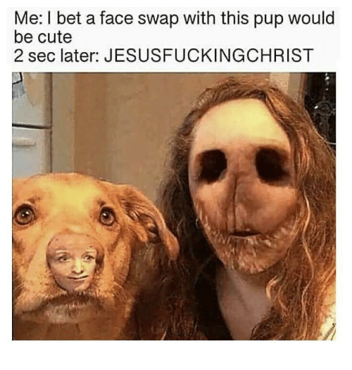 Cute, I Bet, and Face Swap: Me: I bet a face swap with this pup would  be cute  2 sec later: JESUSFUCKINGCHRIST