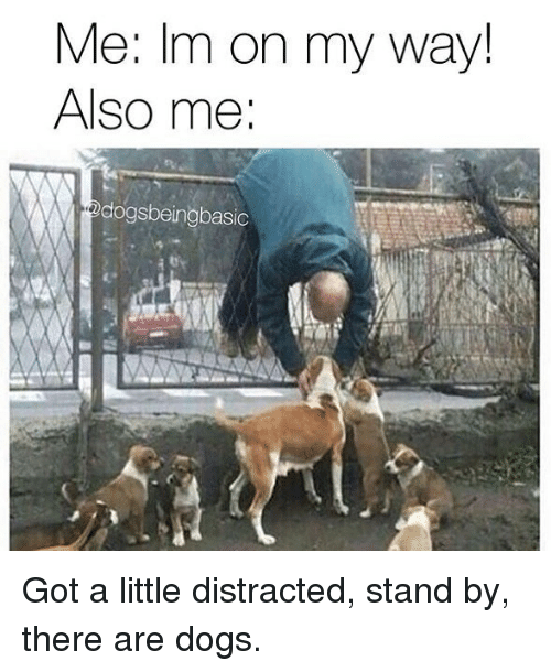 Dogs, Memes, and On My Way: Me: Im on my way!  Also me  dogsbeingbasic Got a little distracted, stand by, there are dogs.