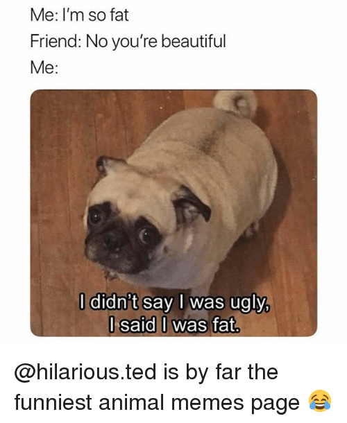 Funniest Animal: Me: I'm so fat  Friend: No you're beautiful  Me:  l didn't say I was ugly,  l said I was fat @hilarious.ted is by far the funniest animal memes page 😂