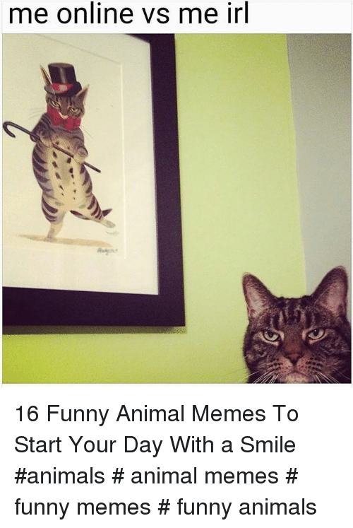 Animals, Funny, and Funny Animals: me online vs me irl 16 Funny Animal Memes To Start Your Day With a Smile  #animals # animal memes # funny memes # funny animals