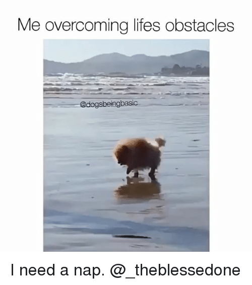 I Need A Nap: Me overcoming lifes obstacles  @dogs beingbasic I need a nap. @_theblessedone