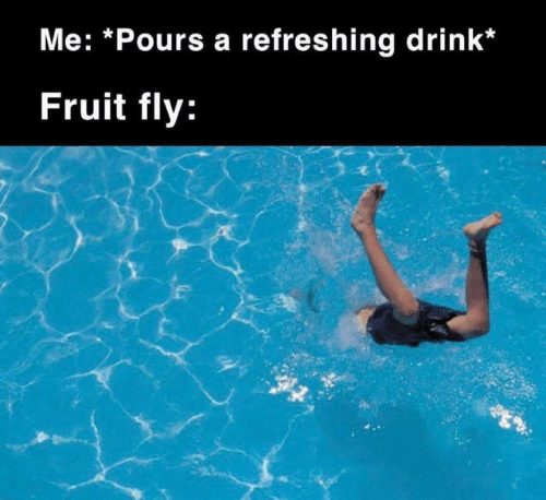 fruit: Me: *Pours a refreshing drink*  Fruit fly