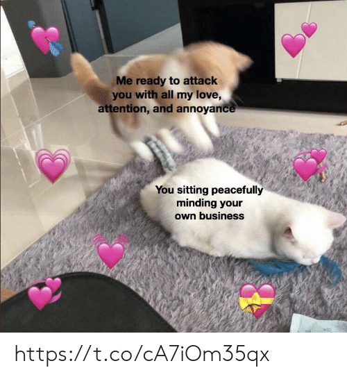 Love, Memes, and Business: Me ready to attack  you with all my love,  attention, and annoyance  You sitting peacefully  minding your  own business https://t.co/cA7iOm35qx
