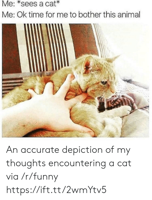 Funny, Animal, and Time: Me: *sees a cat  Me: Ok time for me to bother this animal An accurate depiction of my thoughts encountering a cat via /r/funny https://ift.tt/2wmYtv5