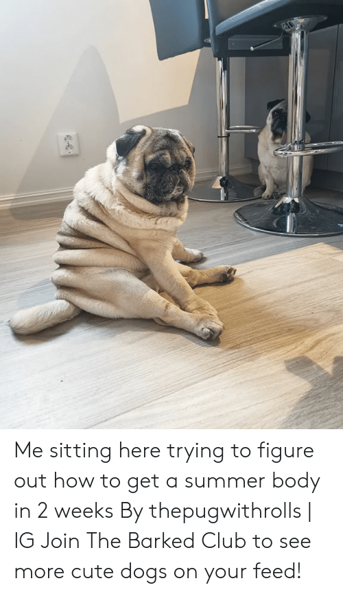 Summer Body: Me sitting here trying to figure out how to get a summer body in 2 weeks By thepugwithrolls | IG  Join The Barked Club to see more cute dogs on your feed!