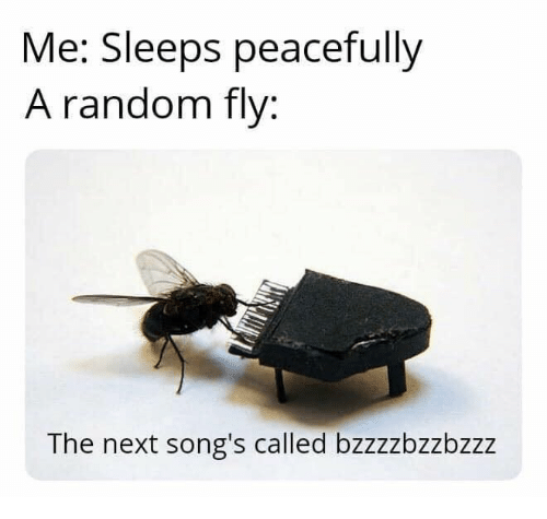 Songs, Random, and Next: Me: Sleeps peacefully  A random fly:  The next song's called bzzzzbzzbzzz