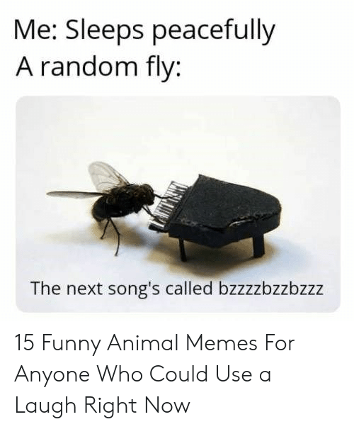 funny animal memes: Me: Sleeps peacefully  A random fly:  The next song's called bzzzzbzzbzzz 15 Funny Animal Memes For Anyone Who Could Use a Laugh Right Now