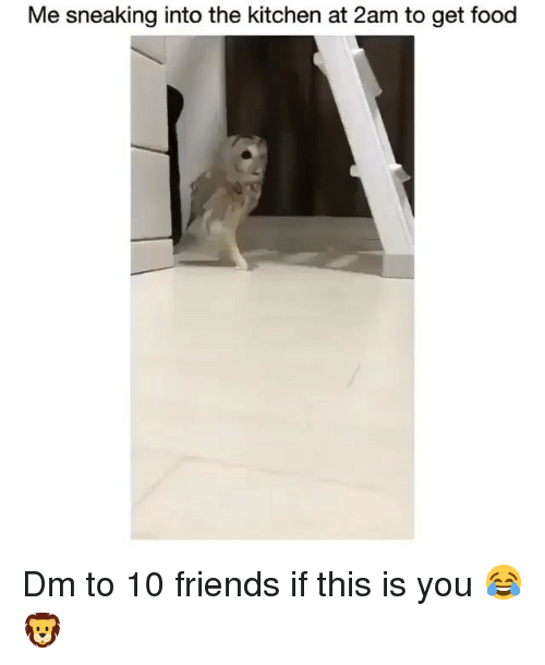 Food, Friends, and Memes: Me sneaking into the kitchen at 2am to get food Dm to 10 friends if this is you 😂🦁