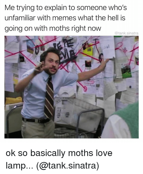 Love, Memes, and Hell: Me trying to explain to someone who's  unfamiliar with memes what the hell is  going on with moths right now  @tank.sinatra ok so basically moths love lamp... (@tank.sinatra)