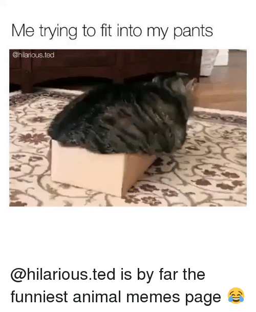 Funniest Animal: Me trying to fit into my pants  @hilarious.ted @hilarious.ted is by far the funniest animal memes page 😂