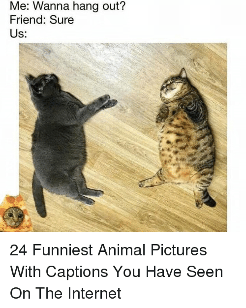 Funniest Animal: Me: Wanna hang out?  Friend: Sure  Us: 24 Funniest Animal Pictures With Captions You Have Seen On The Internet