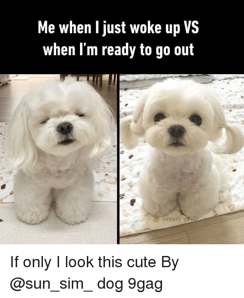 9gag, Cute, and Memes: Me when I just woke up VS  when Im ready to go out If only I look this cute By @sun_sim_ dog 9gag
