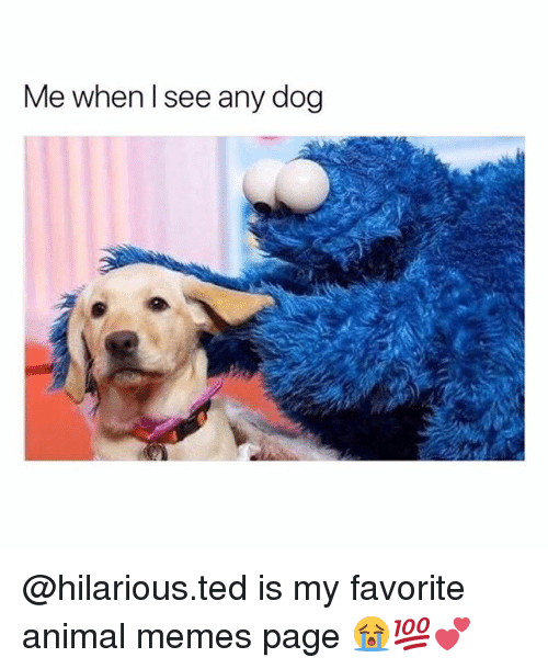 Memes Page: Me when l see any dog @hilarious.ted is my favorite animal memes page 😭💯💕