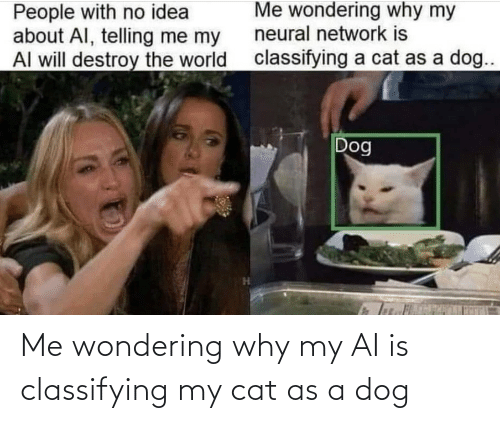 A Dog: Me wondering why my AI is classifying my cat as a dog