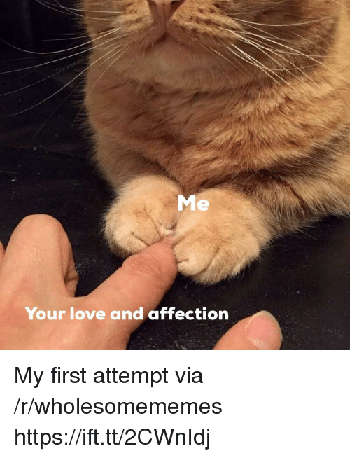 Love, Via, and First: Me  Your love and affection My first attempt via /r/wholesomememes https://ift.tt/2CWnIdj