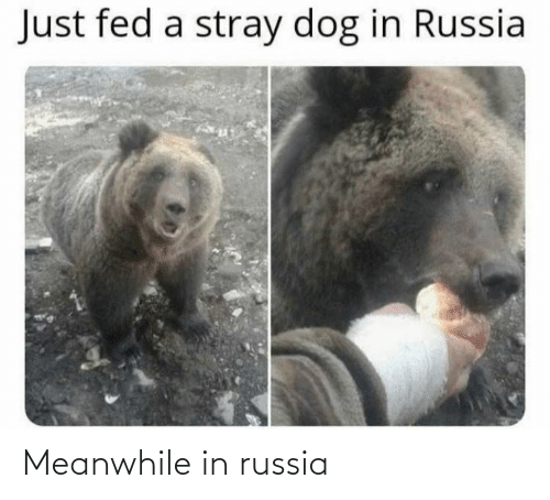 Russia: Meanwhile in russia