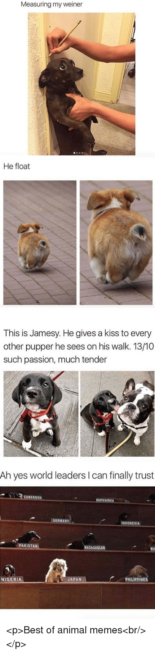 Africa, Memes, and Animal: Measuring my weiner   He float   This is Jamesy. He gives a kiss to every  other pupper he sees on his walk. 13/10  such passion, much tender   Ah yes world leaders I can finally trust  CAMEROON  SOUTH AFRICA  GERMANY  INDONESIA  PAKISTAN  MADAGASCAR  BUI  PHILIPPINES  JAPAN-  NIGERIA <p>Best of animal memes<br/></p>
