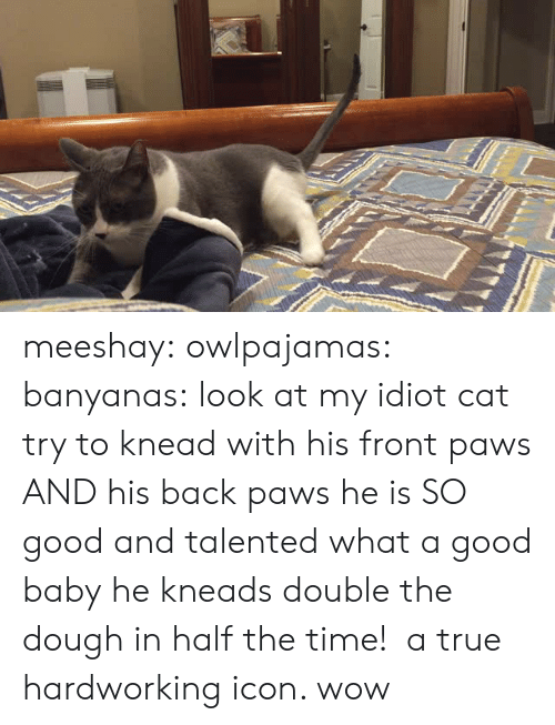 True, Tumblr, and Wow: meeshay: owlpajamas:  banyanas: look at my idiot cat try to knead with his front paws AND his back paws he is SO good and talented  what a good baby  he kneads double the dough in half the time!  a true hardworking icon. wow