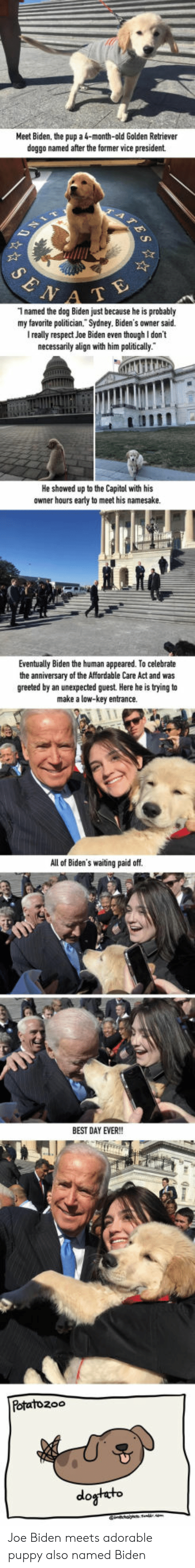 Joe Biden, Low Key, and Respect: Meet Biden, the pup a 4-month-old Golden Retriever  doggo named after the former vice president  A T  1 named the dog Biden just because he is probably  my favorite politician. Sydney. Biden's owner said.  really respect Joe Biden even though I don't  necessarily align with him politically  He showed up to the Capitol with his  owner hours early to meet his namesake.  Eventually Biden the human appeared. To celebrate  the anniversary of  greeted by an unexpected guest. Here he is trying to  the Affordable Care Act and was  make a low-key entrance.  All of Biden's waiting paid off  BEST DAY EVER!  Potatozoo  do Joe Biden meets adorable puppy also named Biden