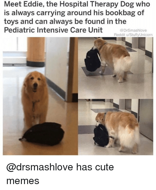 Cute, Funny, and Memes: Meet Eddie, the Hospital Therapy Dog who  is always carrying around his bookbag of  toys and can always be found in the  Pediatric Intensive Care Unit  @DrSmashlove  Reddit u/Stuffy Unicorn @drsmashlove has cute memes
