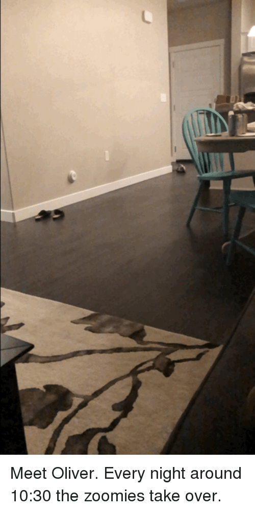 Zoomies: Meet Oliver. Every night around 10:30 the zoomies take over.