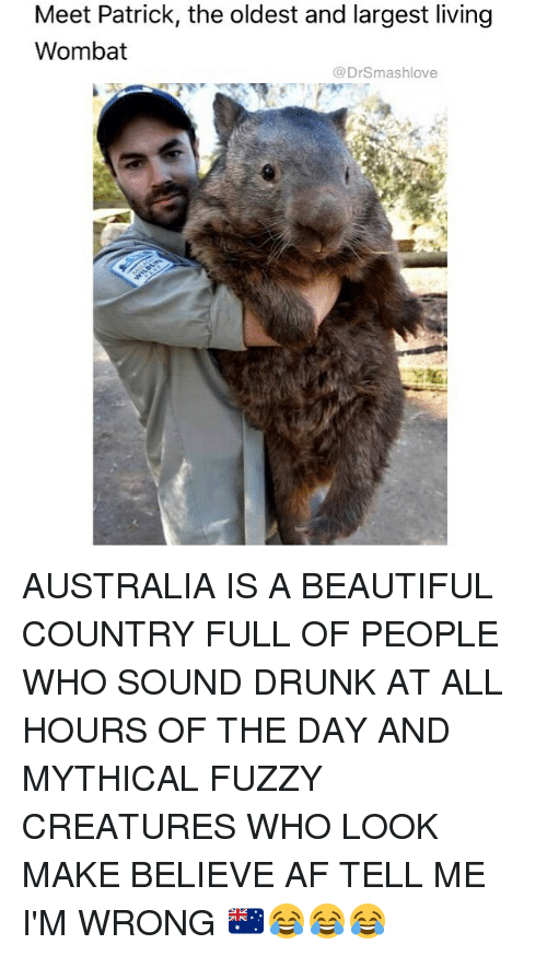 wombats: Meet Patrick, the oldest and largest living  Wombat  @DrSmashlove AUSTRALIA IS A BEAUTIFUL COUNTRY FULL OF PEOPLE WHO SOUND DRUNK AT ALL HOURS OF THE DAY AND MYTHICAL FUZZY CREATURES WHO LOOK MAKE BELIEVE AF TELL ME I'M WRONG 🇦🇺😂😂😂