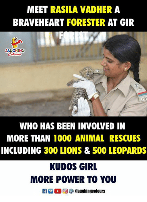 braveheart: MEET RASILA VADHER A  BRAVEHEART FORESTER AT GIR  LAUGHING  WHO HAS BEEN INVOLVED IN  MORE THAN 1000 ANIMAL RESCUES  INCLUDING 300 LIONS & 500 LEOPARDS  KUDOS GIRL  MORE POWER TO YOU  R 0 @] ㊧ /laughingcolours